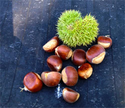 Wild Chestnusts