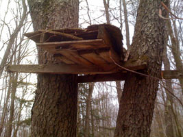 Appalachian land conservation services reminds forest for Permanent tree stand